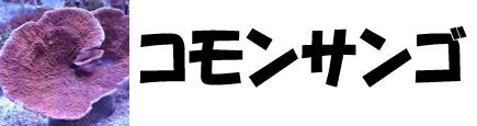 コモンサンゴ