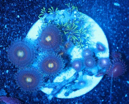 画像1: coral盆栽 3 (1)